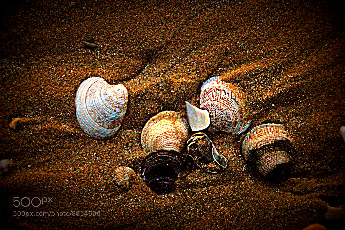 Photograph on the beach by Sushila C. on 500px