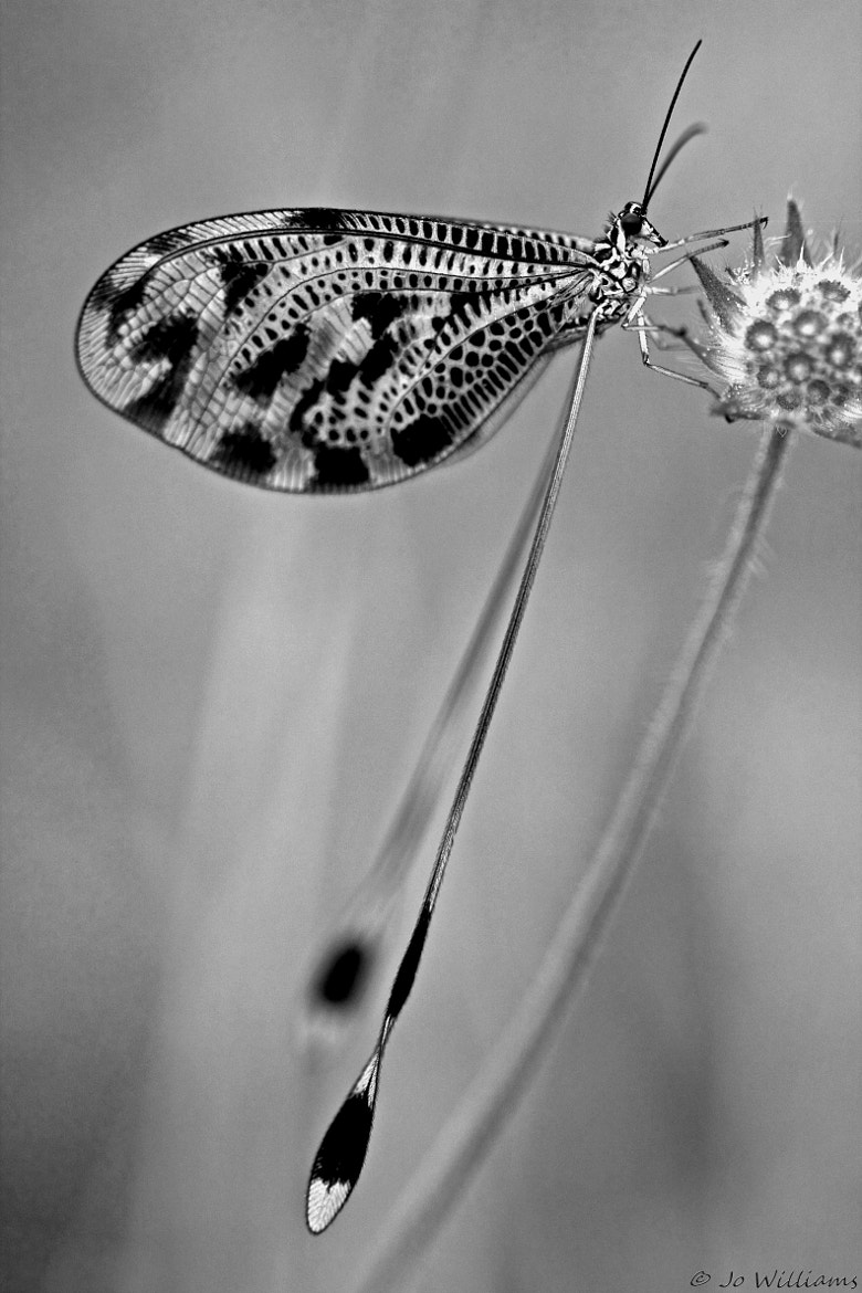 Photograph >< monofly >< by jo williams on 500px