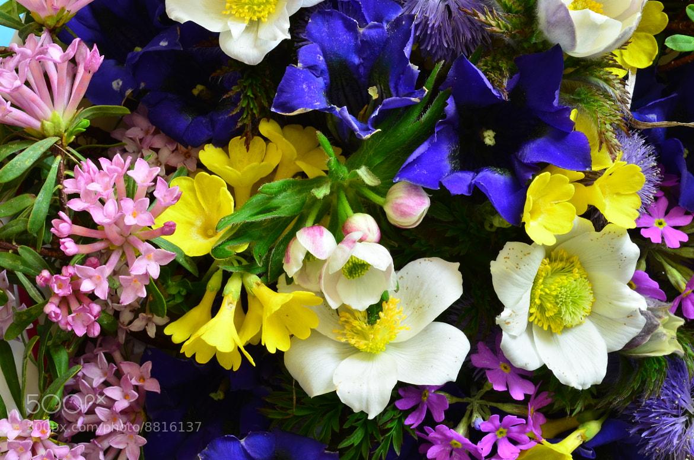 Photograph alpine flowers bouquet by helmut flatscher on 500px