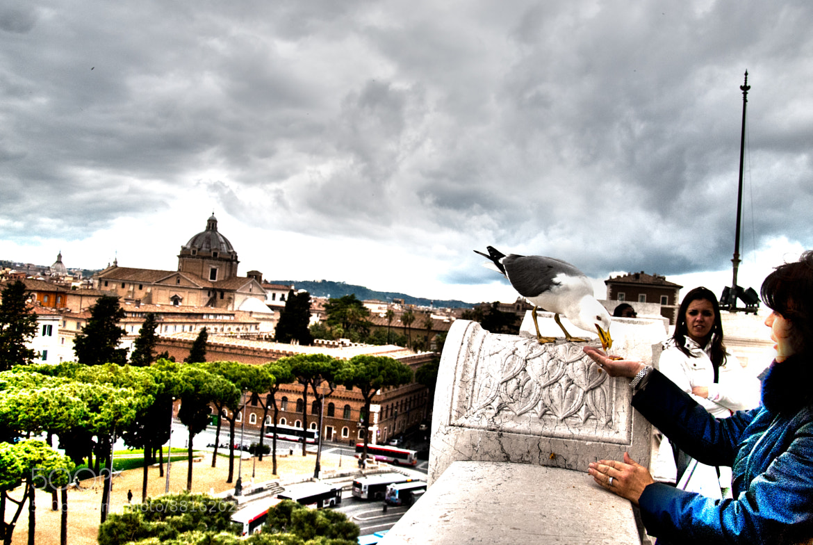 Photograph Seagulls in Rome by Francesco Zappalà on 500px