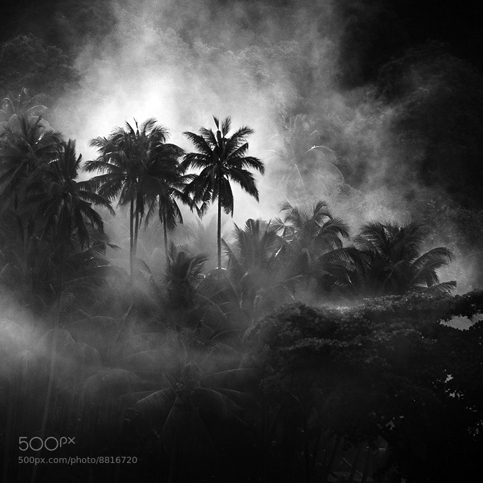 Photograph Rain Forest by Hengki Koentjoro on 500px