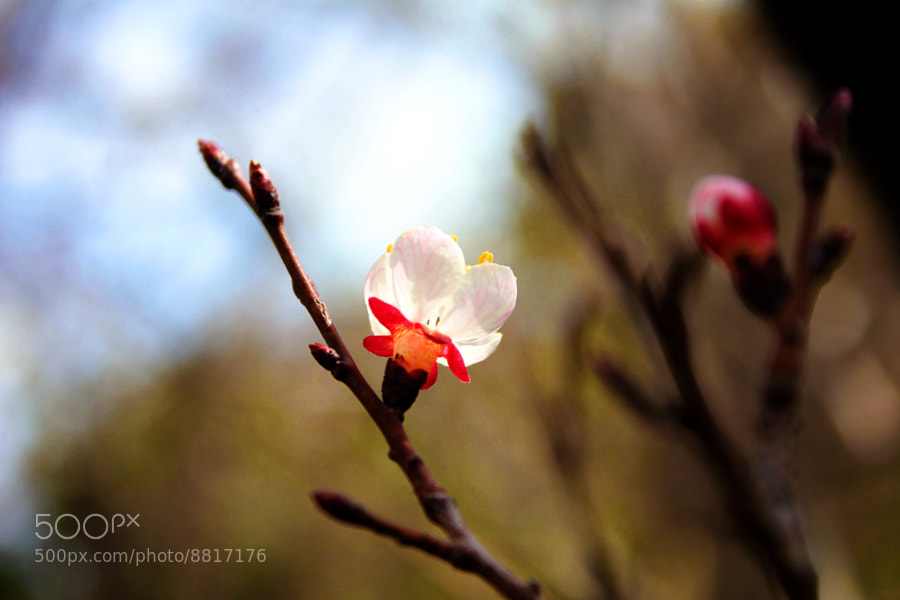 Tiny Blossom by behnam tarin (behnamtarin) on 500px.com