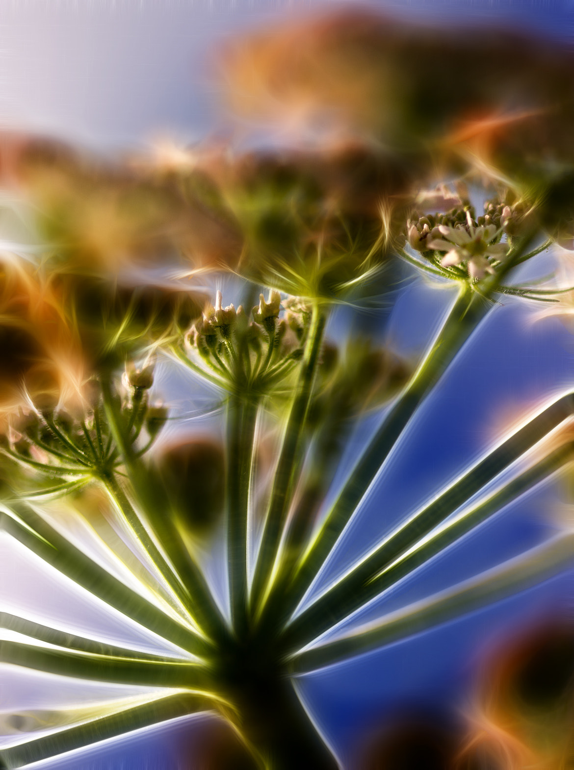 Photograph Hogweed by Alan Sheers on 500px