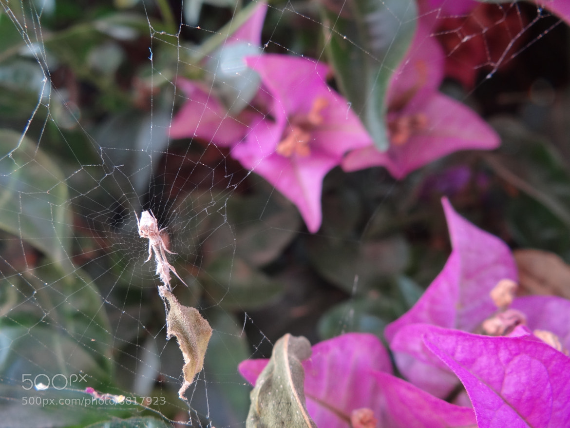 Photograph Spider by shahar shalom on 500px