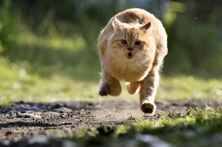 Photograph Run.... Baby...... !!! by Dangerouz Yusra on 500px