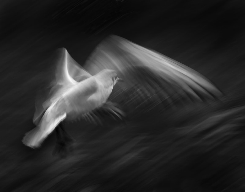 Photograph Seagull Study 32 by Anne McGrath on 500px