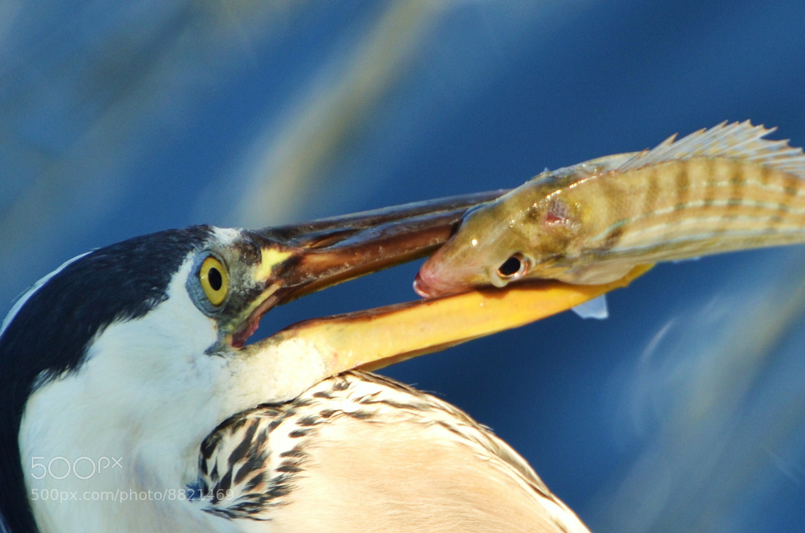 Photograph Eye to Eye by Michael Fitzsimmons on 500px