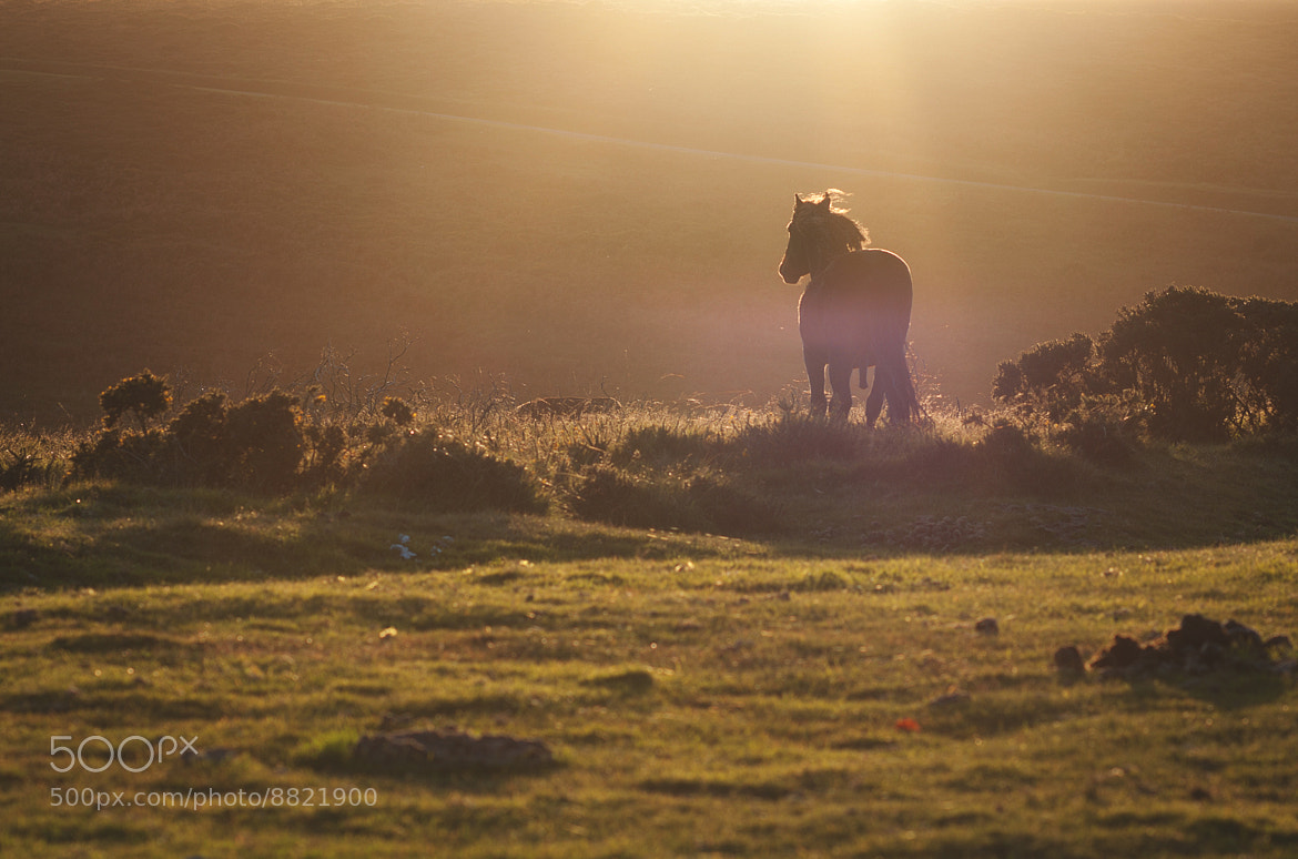 Photograph Dartmoor by Aquarius ! on 500px