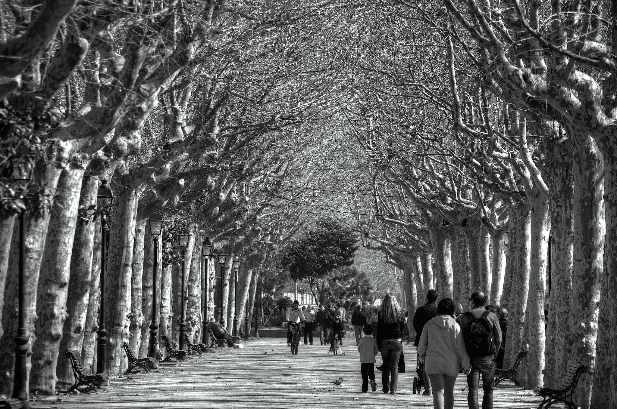 Photograph Paseo by Josep Maria Colls Trullen on 500px