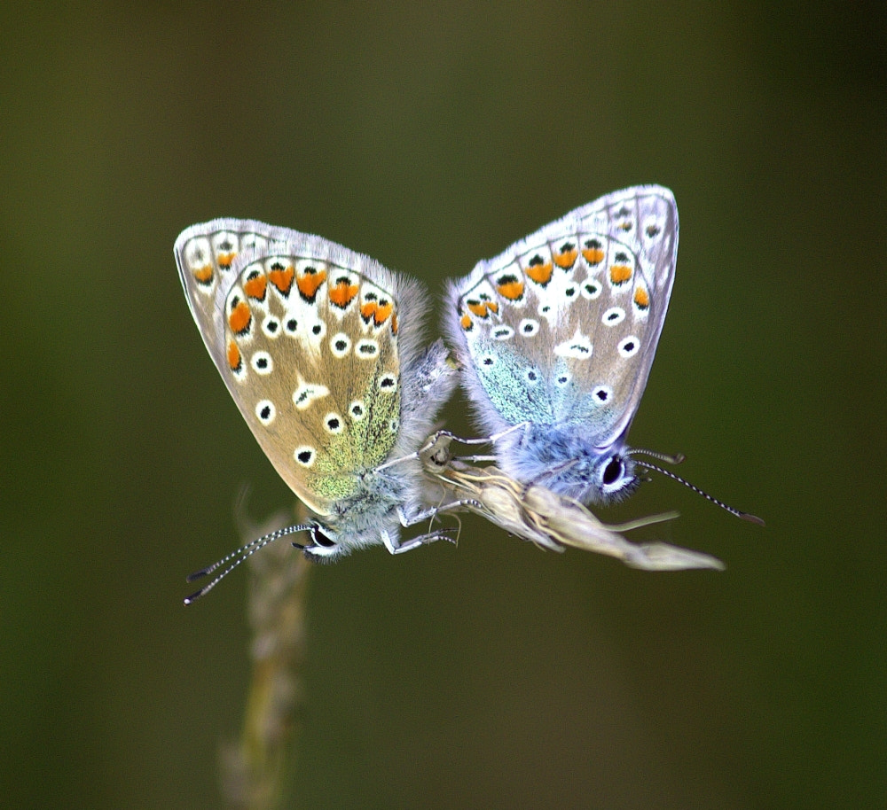 Photograph Coupled Blues by Chrissie Barrow on 500px
