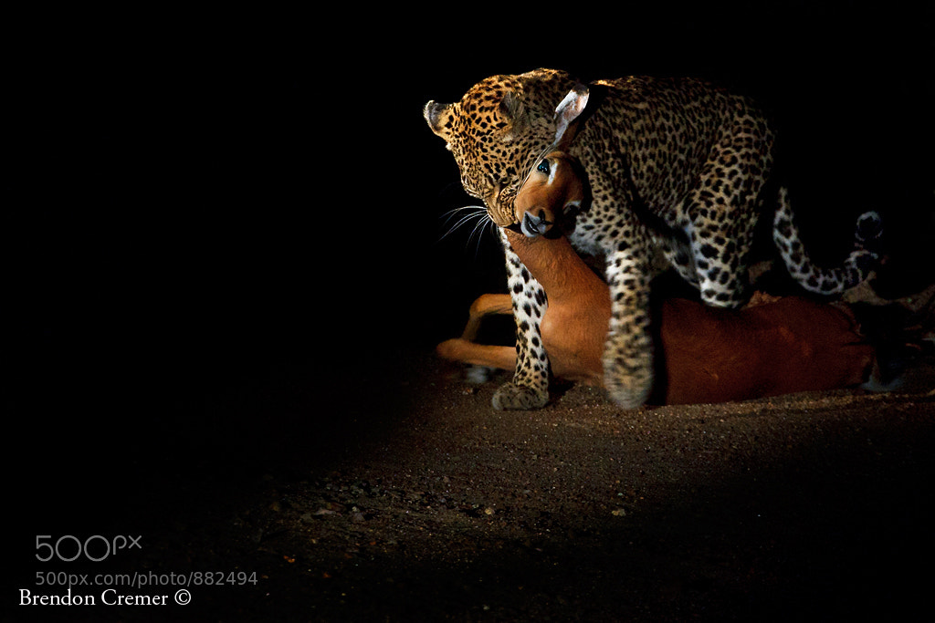 Photograph Leopards Prize by Brendon Cremer on 500px