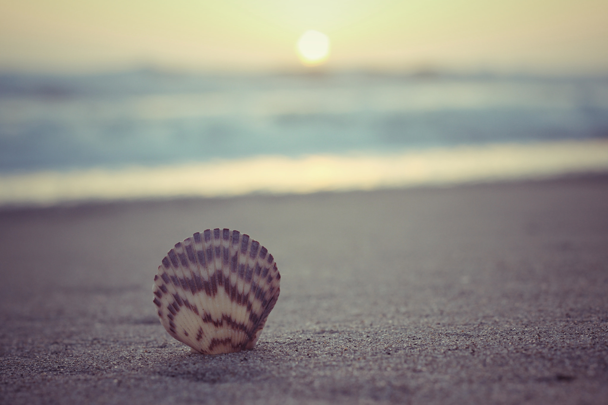 Photograph Shell by Courtney D on 500px