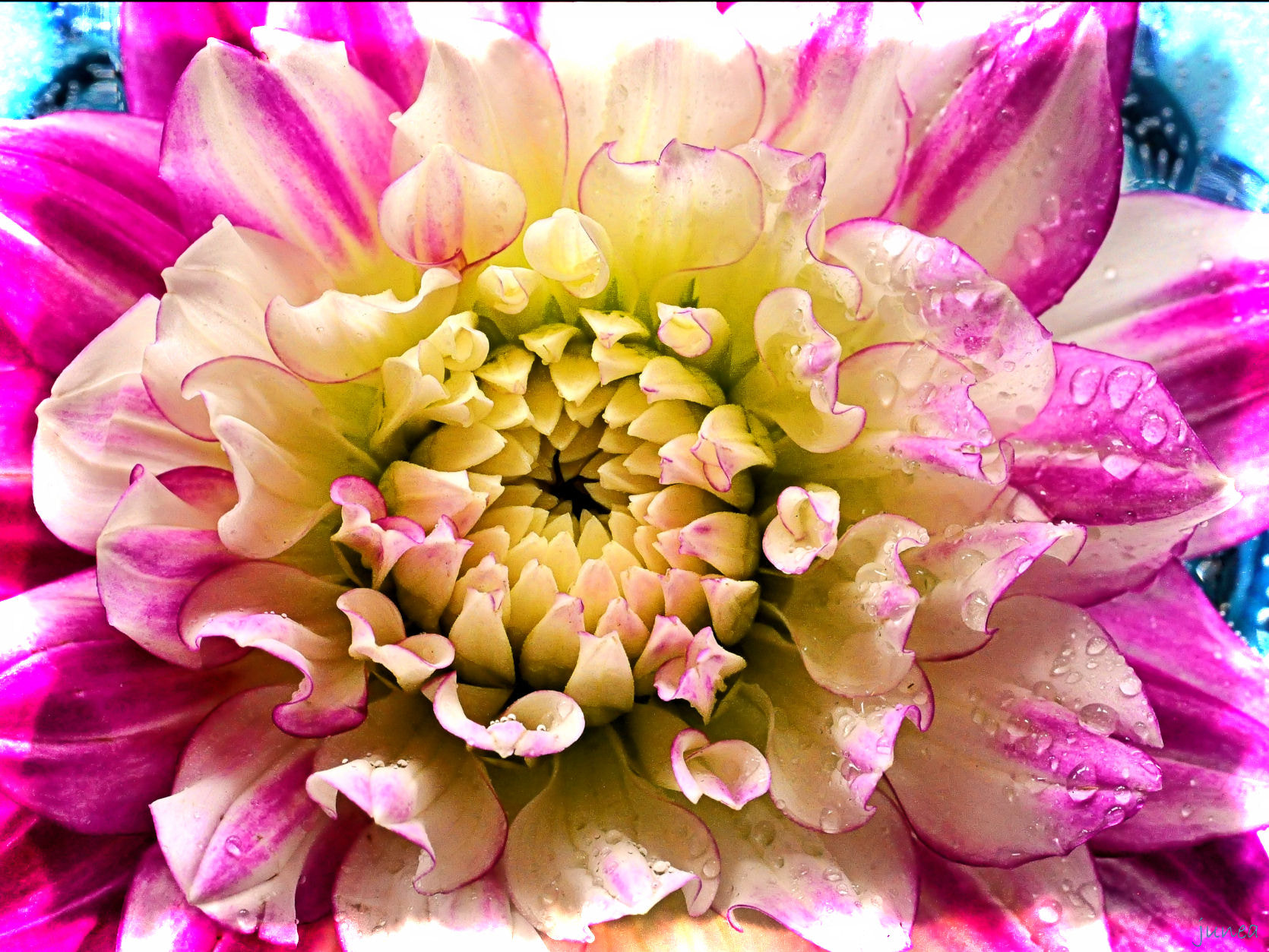 Photograph flower by June A on 500px