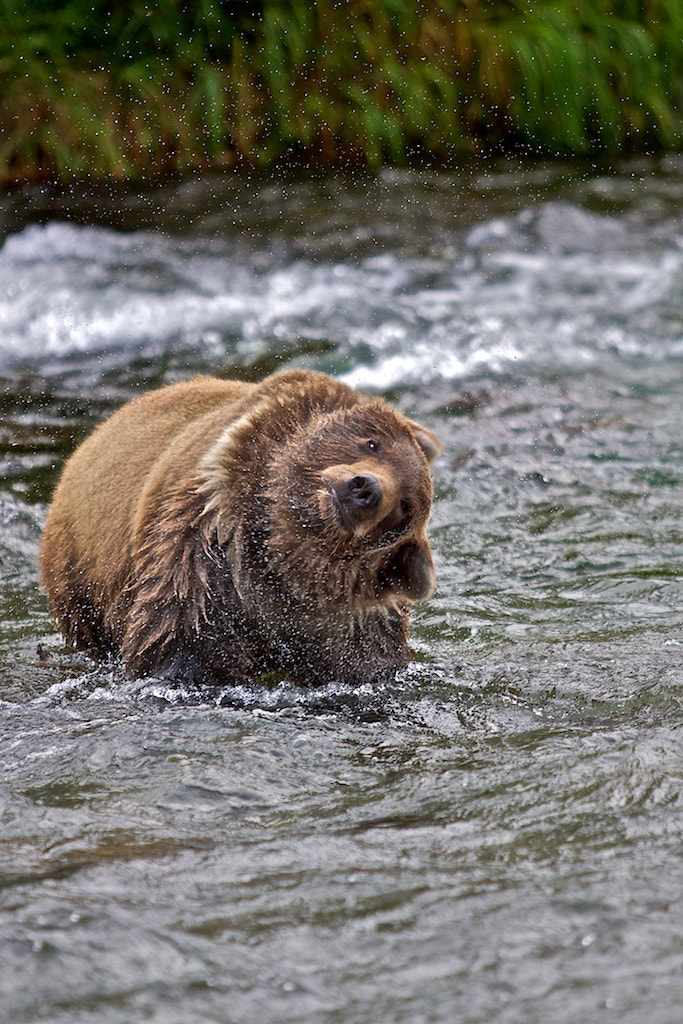 Photograph I HATE Water In My Ears! by Donna Shreck on 500px