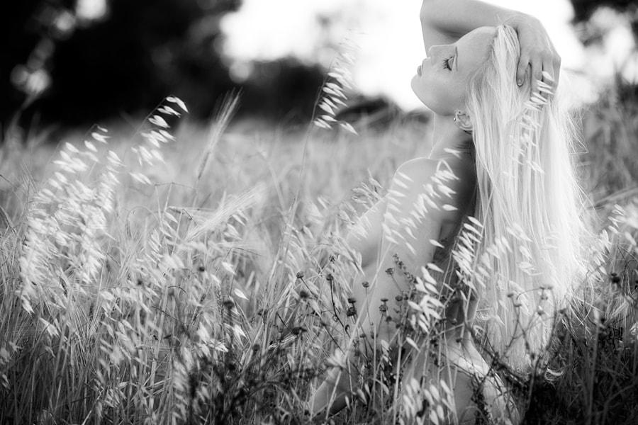 whispering cornfield