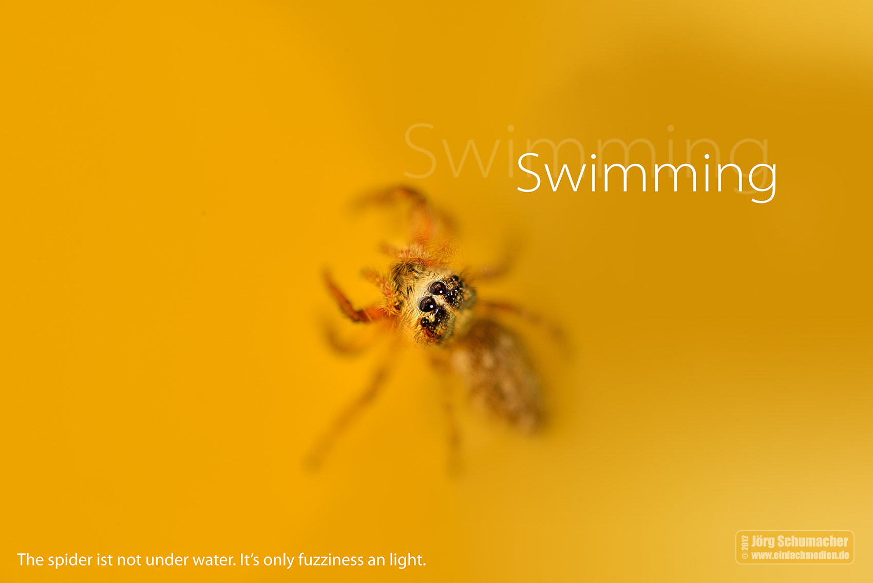 Photograph Swimming spider by Jörg Schumacher | einfachMedien.de on 500px