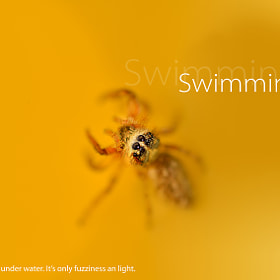 Swimming spider