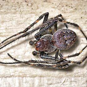 Spinne | Spider