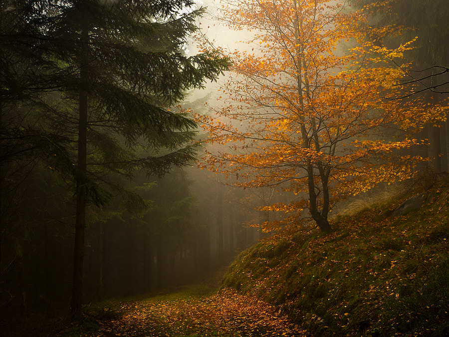 Photograph A foggy day in the forest by petersamuelsson.se  on 500px