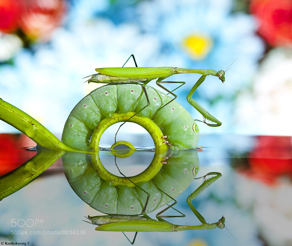"Photograph "" Pon ring donut "" by Namo Gallery on 500px"