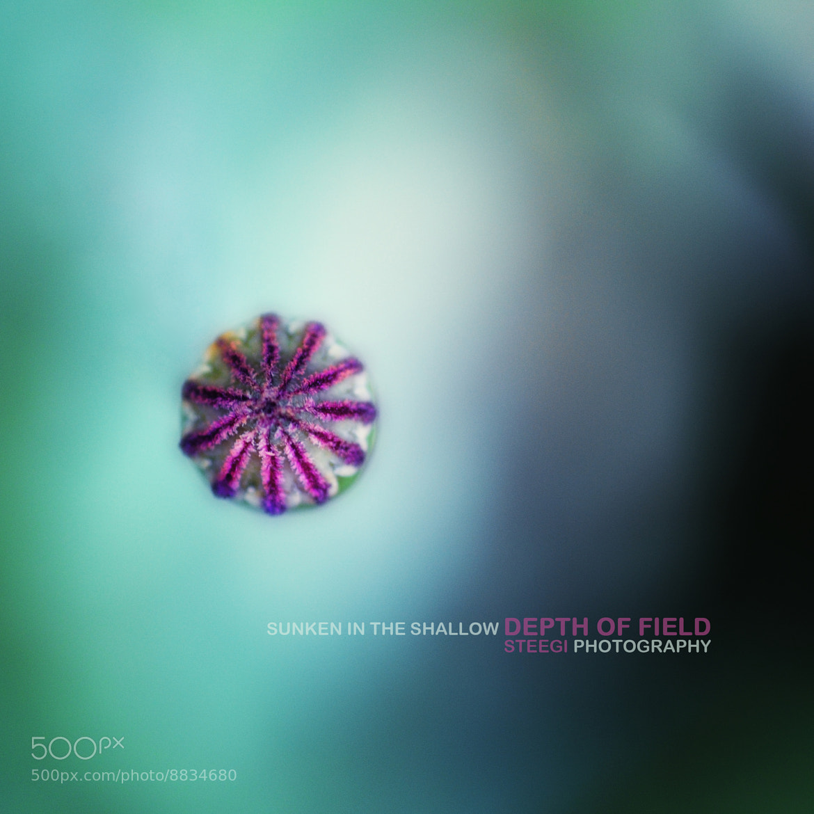 Photograph Sunken in the Depth of Field by Andreas Steegmann on 500px