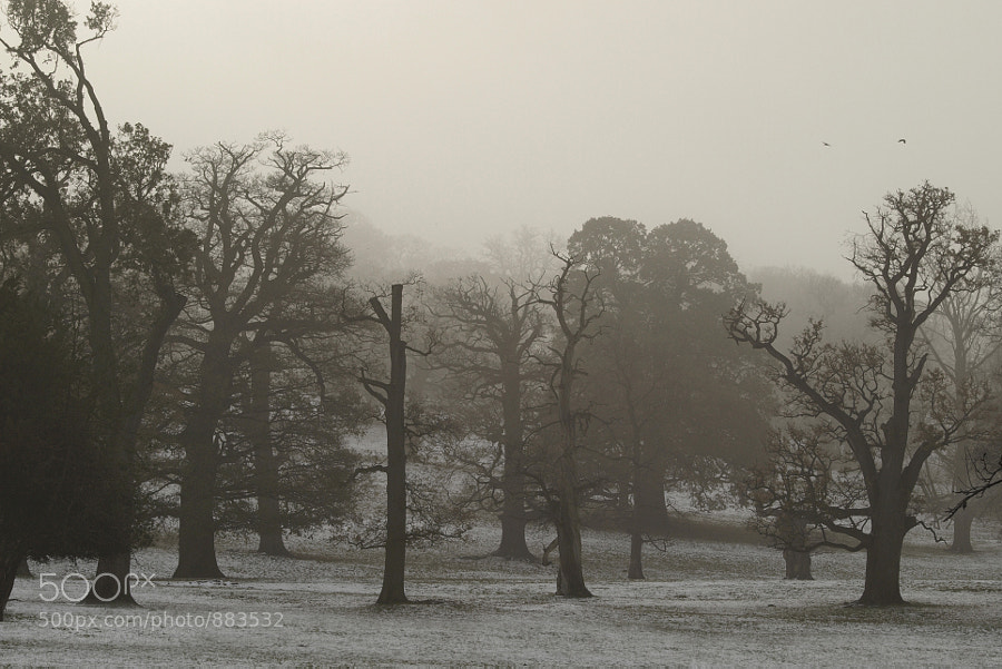 Photograph Wood In Fog by George Wheelhouse on 500px