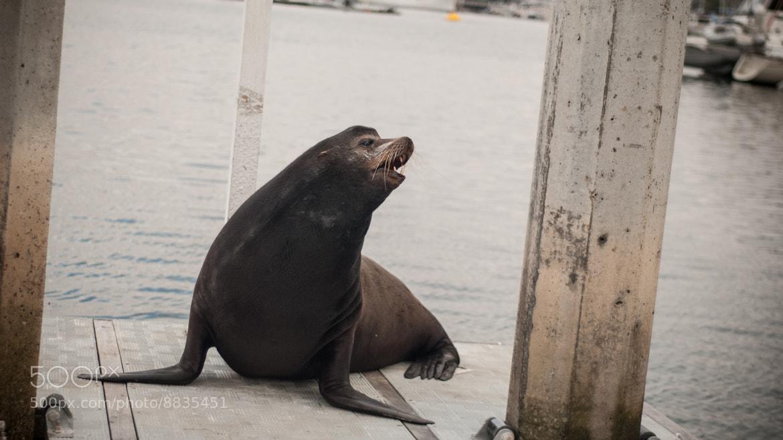 Photograph Sea lion by manolo sañudo on 500px