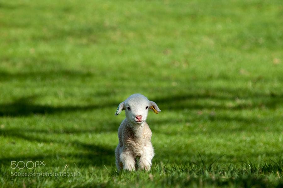Photograph Hey you guys! by George Wheelhouse on 500px