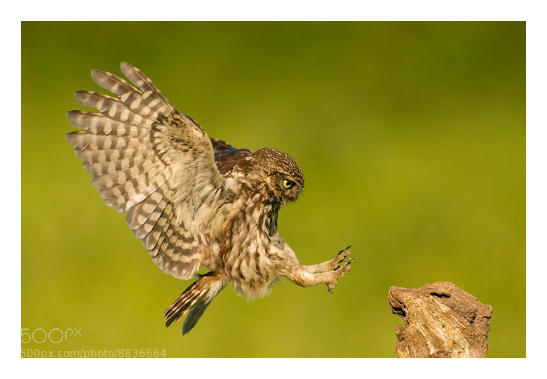Photograph Happy landings by Jules Cox on 500px