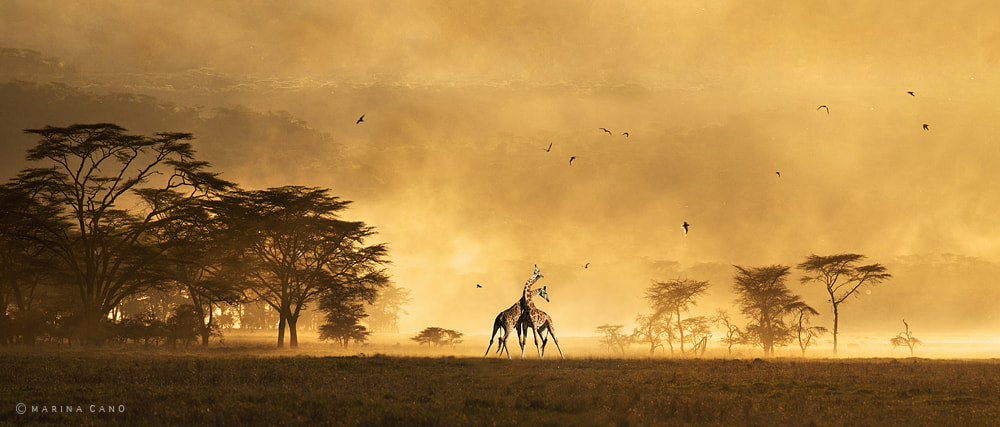 Photograph African Heart by Marina Cano on 500px