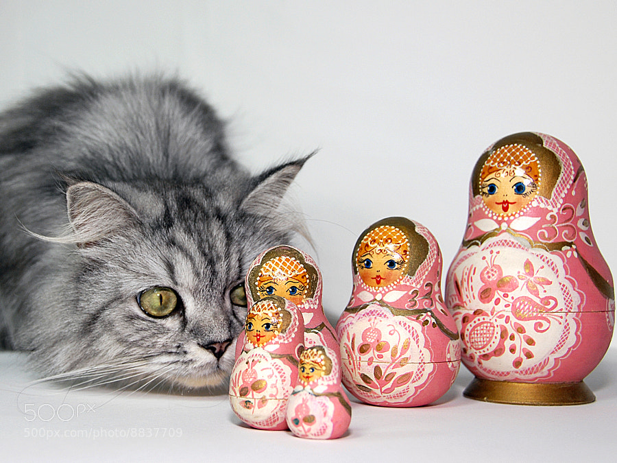 Milo and Matryoshka Dolls by Graham Taylor