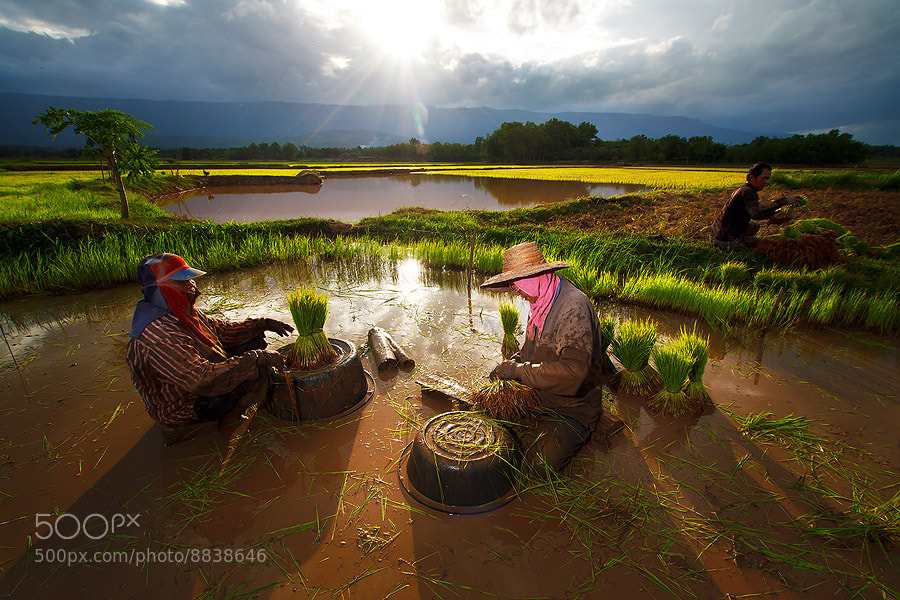 Photograph Thai farmers ii by jeerasak Chaisongmuang on 500px