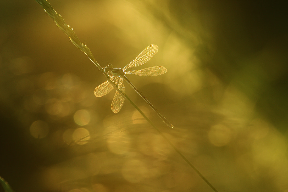Photograph *** by Vadim Trunov on 500px