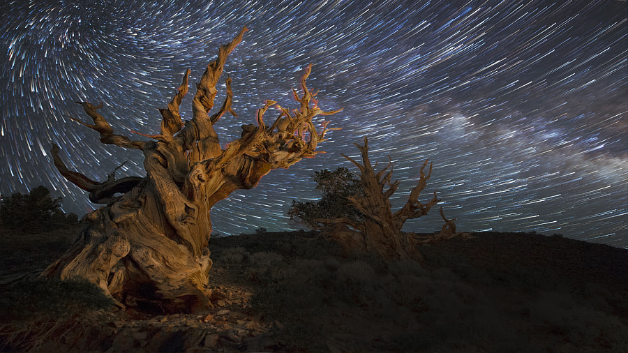 Bristlecone Pine Forest by Sashikanth Chintla on 500px.com
