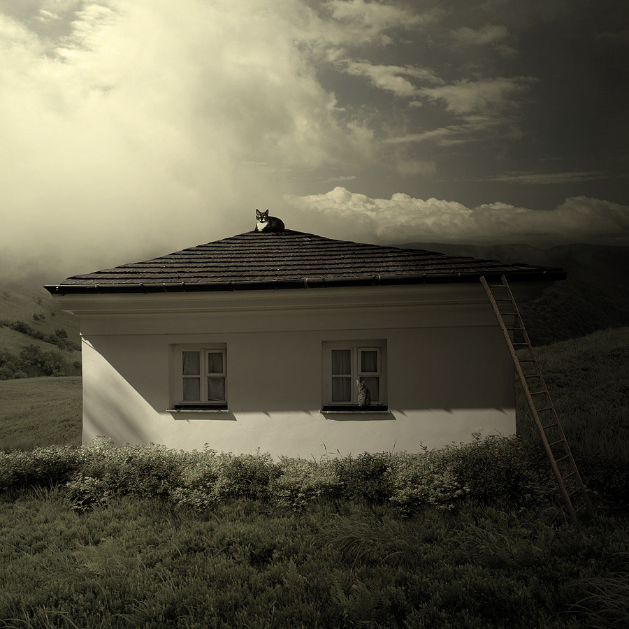 Photograph Cathome by Tomasz  on 500px