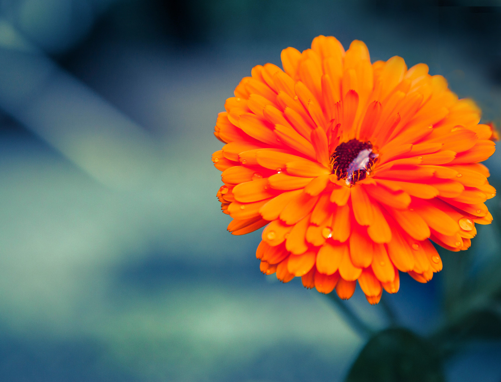 Photograph Orange Flower by Sheryl Tait on 500px