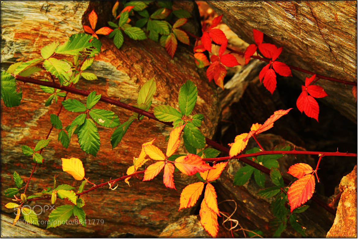 Photograph Colorful Leaves by Bilge Cirak on 500px