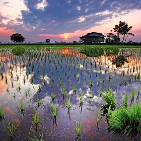 A Morning at the Paddy Field by Foo Weng (fooweng)) on 500px.com
