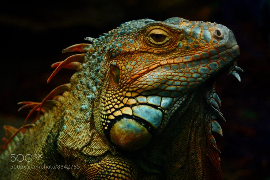 Photograph Lizard God of wrath! by Jóhann Ingi on 500px