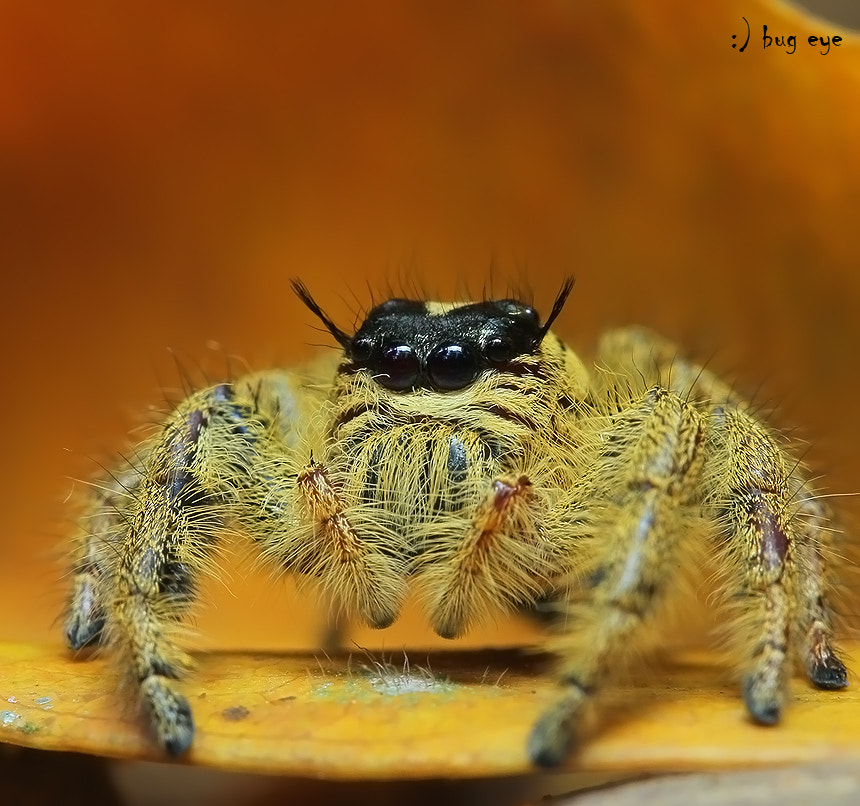 Photograph !!!!-_-!!!!   miss hairy by bug eye :) on 500px