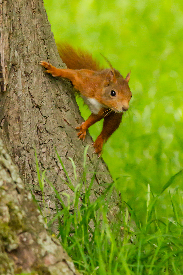 Photograph Squirrel by Markus _ on 500px