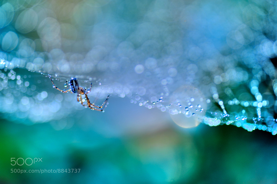 Photograph Symphony No.9~New World by Lafugue Logos   on 500px