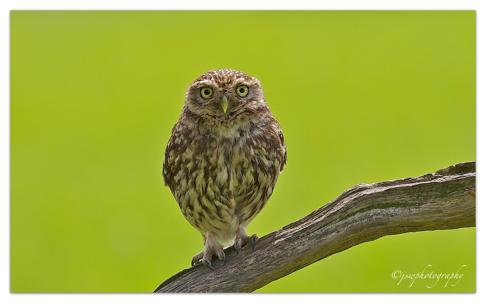 Photograph Are you looking at ME…..!! by Jason Wood on 500px