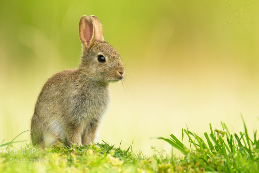 Photograph rabbit by Peter Kralik on 500px