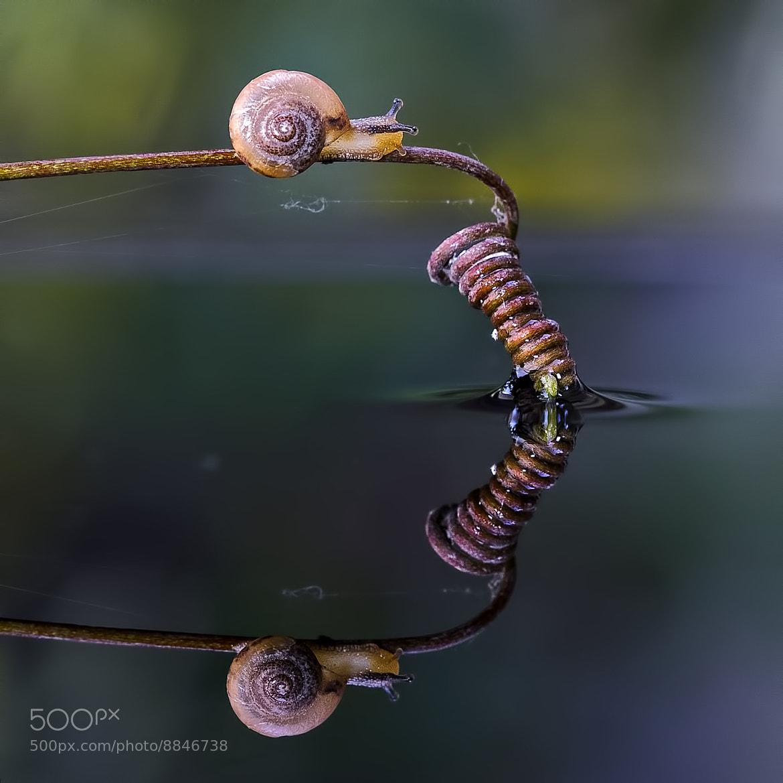 Photograph Slow But Sure by Nunu Rizani on 500px