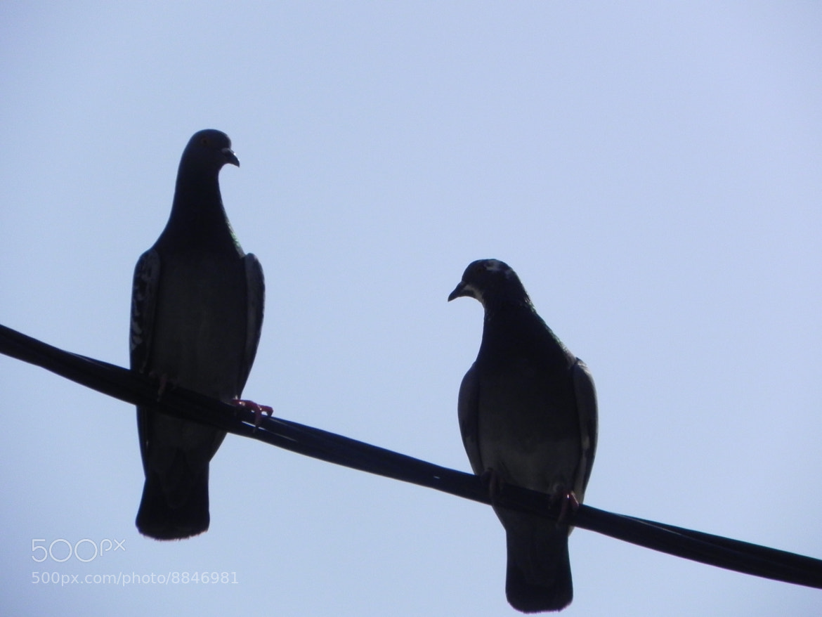 Photograph two pigeons by Liora Levin on 500px