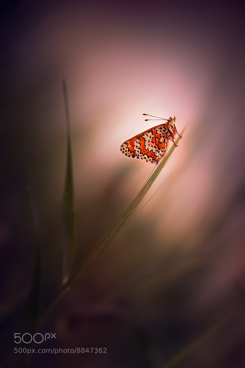 Photograph In the light by DOUCHE Ludovic on 500px