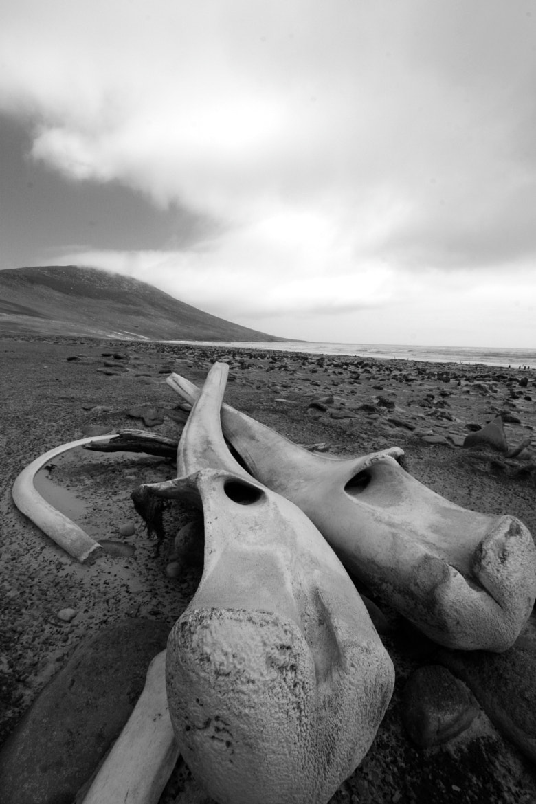 Photograph Whale Bone Graveyard by Adam McNair on 500px