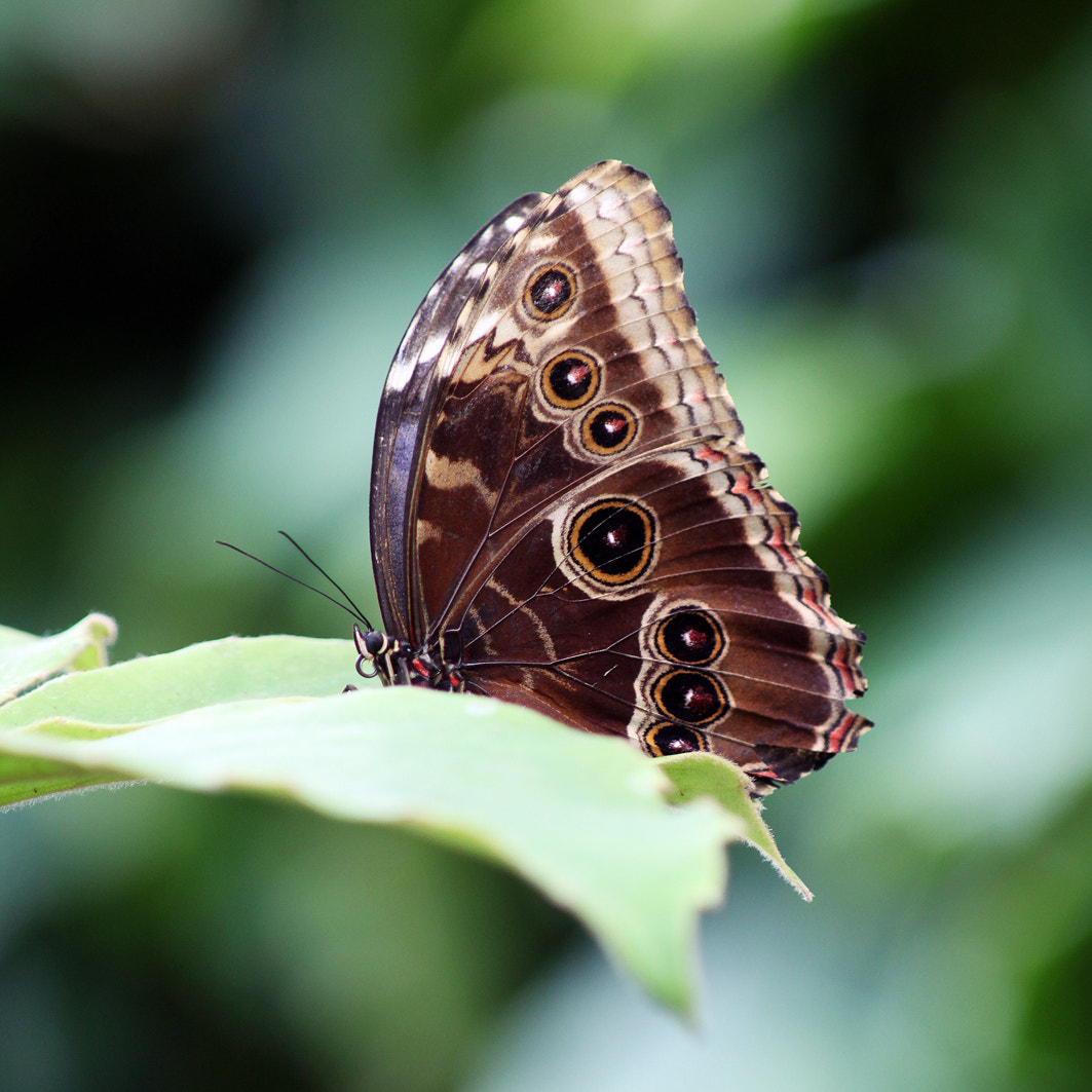 Photograph Morpho by Mariano Fernandez Martinez on 500px