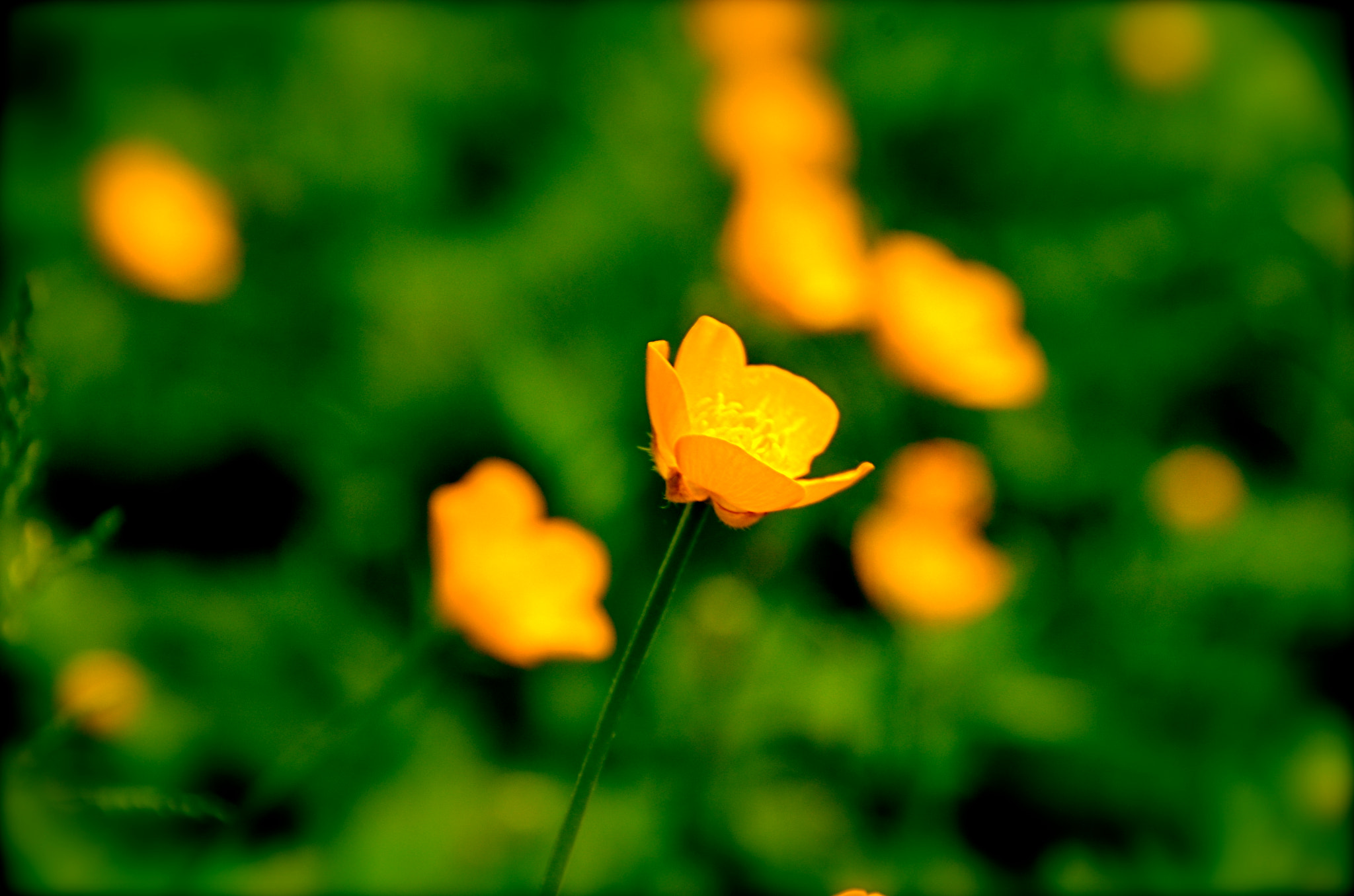 Photograph One amongst many by nakky in on 500px